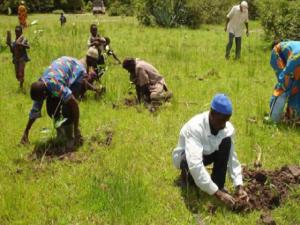Farmers-planting-seedlings-300x225