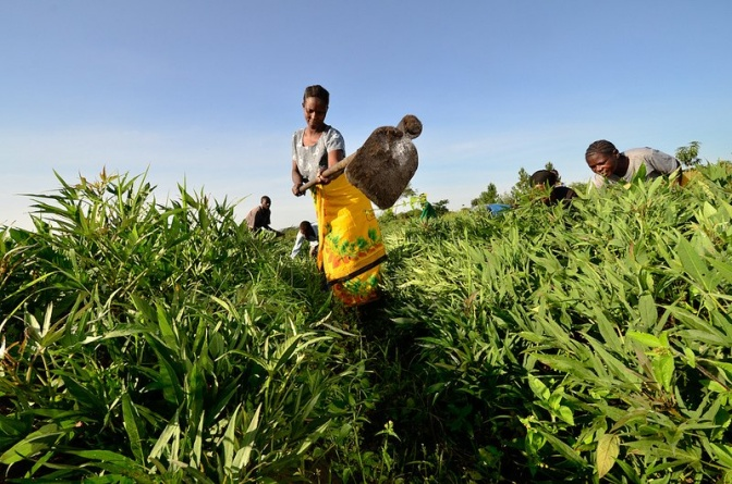 Smallholder-farmer-in-East-Africa-672x445